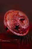 Красный макрос колокола рождества Стоковое Изображение RF