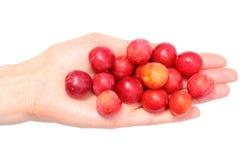 Красный Мирабель в руке женщины Белая предпосылка Стоковое Фото