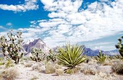 Красный национальный парк каньона утеса, Невада стоковое фото