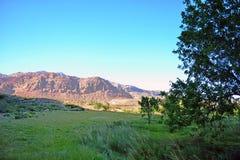 Красный оазис каньона утеса, Лас-Вегас Стоковые Фото