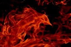 Красный огонь Стоковая Фотография
