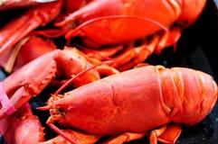 Красный омар Стоковая Фотография RF