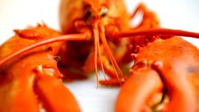 Красный омар акции видеоматериалы