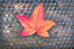 Красный оранжевый кленовый лист на столешнице сетки Стоковое Изображение RF
