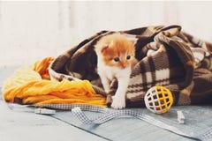 Красный оранжевый newborn котенок в одеяле шотландки Стоковое Изображение