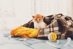 Красный оранжевый newborn котенок в одеяле шотландки Стоковое Фото