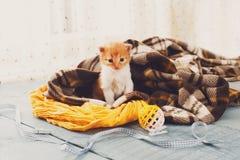 Красный оранжевый newborn котенок в одеяле шотландки Стоковая Фотография