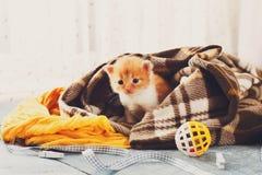Красный оранжевый newborn котенок в одеяле шотландки Стоковые Изображения RF