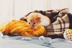 Красный оранжевый newborn котенок в одеяле шотландки Стоковое Изображение RF