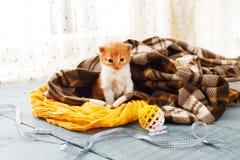 Красный оранжевый newborn котенок в одеяле шотландки Стоковое фото RF