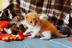 Красный оранжевый newborn котенок в одеяле шотландки Стоковые Изображения