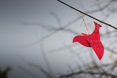 Красный орнамент птицы на ветви Хорошие обои с copyspace Стоковое Изображение