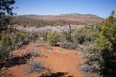 Красный парк штата утеса, взгляд Hiker Стоковые Фотографии RF