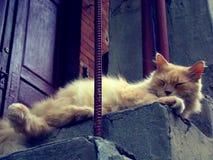 Красный персидский кот отдыхает на лестницах Стоковое фото RF
