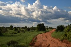 Красный песок, зеленые растения Ландшафт на национальном парке Tsavo, Кении в апреле Стоковое Изображение