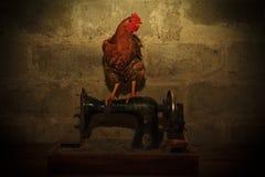 Красный петух сидя на швейной машине Стоковое Фото