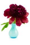 Красный пион в голубой вазе стоковое изображение rf