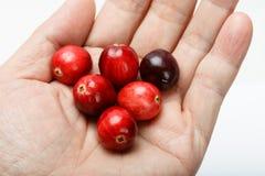 Красный плодоовощ клюквы Стоковое Изображение