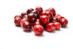 Красный плодоовощ клюквы Стоковая Фотография RF