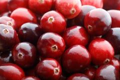 Красный плодоовощ клюквы Стоковое фото RF