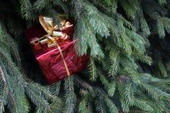 Красный подарок на ели Стоковые Изображения