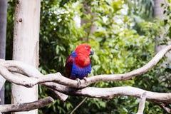 Красный попыгай Стоковое Изображение