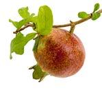 Красный плодоовощ гранатового дерева на белой предпосылке Стоковые Фото