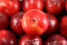 Красный плодоовощ сливы Стоковые Фотографии RF