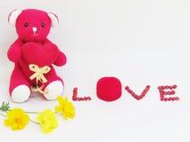 Красный плюшевый медвежонок сидит владение красное сердце с литерностью ВЛЮБЛЕННОСТИ сделало из красных семян и красной коробки к Стоковые Фото