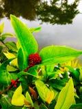 Красный растущий цветок стоковое изображение