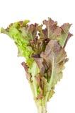 Красный салат лист Стоковое фото RF