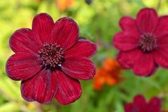 Красный сад цветка Стоковое фото RF