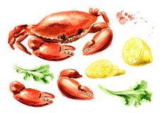 Красный сваренный краб с набором лимона и салата, морепродуктами, иллюстрацией руки акварели вычерченной изолированной на белой п иллюстрация вектора