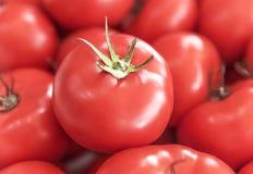 Красный сочный зрелый томат Стоковая Фотография RF
