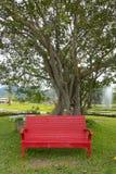 Красный стул на зеленой траве с деревом Стоковое Изображение
