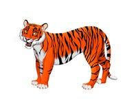 Красный тигр шаржа иллюстрация штока