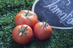красный томат на траве в зиме Стоковые Изображения