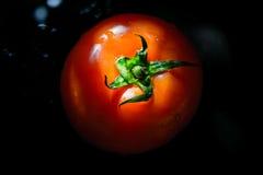 Красный томат на черной предпосылке Стоковое Фото