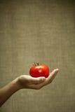 красный томат Стоковые Изображения