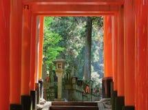 Красный тоннель стробов в Киото Стоковая Фотография RF