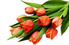 Красный тюльпан цветет букет Стоковое Изображение