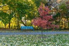 Красный дуб Стоковая Фотография