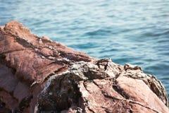 Красный утес и голубая предпосылка природы селективного фокуса моря Стоковые Изображения RF