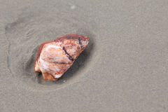 Красный утес на пляже песка Стоковое Фото