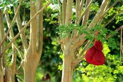 Красный фидер птицы смертной казни через повешение Стоковые Изображения