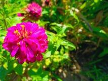 Красный цветок в заводе стоковая фотография rf
