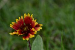 Красный цветок, в саде очаровательном и красочном стоковые изображения rf