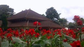 Красный цветок в саде сток-видео
