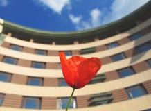 Красный цветок в sity Стоковые Фотографии RF