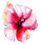 Красный цветок гибискуса Стоковое Изображение RF